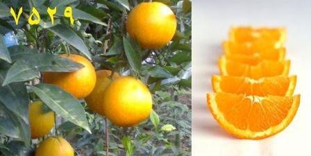 تعریف باغچه و کلبه روستایی راویدسرا